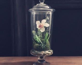 Orchid Terrarium Etsy