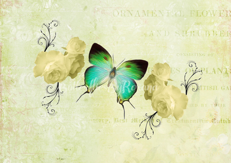 Silk Butterfly Costa Rica Digital art print Set of 3 Colour Sepia ...