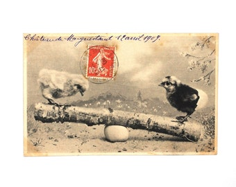 Cute chicks in spring-Easter-April - postcard black and white French antique 1900 s