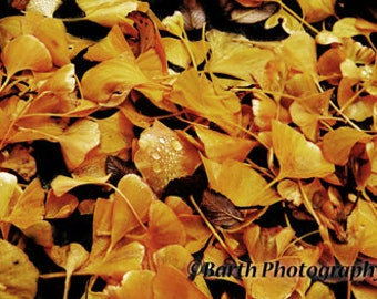 Artistic Photograph-- Leaves--Gifts for men women, for her, him, forest, deco, color, minimalist, nature, decor, wall art, prints