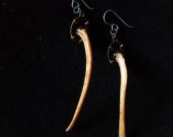 Cat Rib Earrings w/ Anodized Niobium Ear Wires