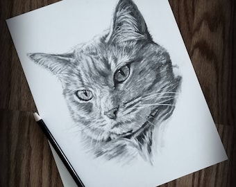 8X10 Pet Sketch Drawing - Cat