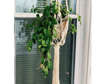 Macrame Plant Hanger with Wavy Tassel • Wall Hanging, Wall Decor, Home or Garden Decor