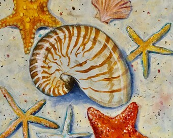Seashell collection featuring a nautilus with starfishes