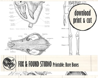 Printable Bones & Heart Illustrations Ephemera digital download, A4 sheet, junk journaling, collage, mixed media, Halloween, skeleton