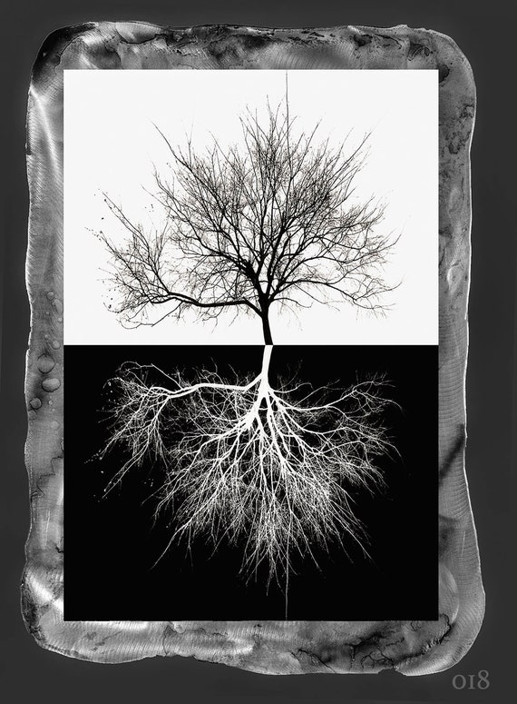 "18""x26"" The Tree of life, New Orleans , Mixed media photo print on metal frame with resin clear coat   t"