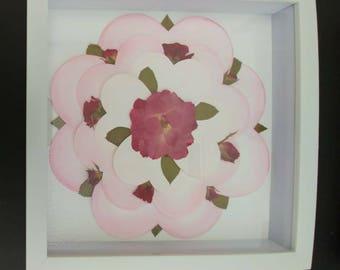 Pressed flower rose Mandalay in 8X8 white shadow box