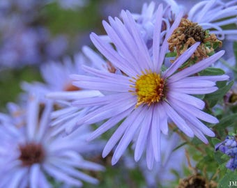 Vivid Blue Flower Nature Photography Print