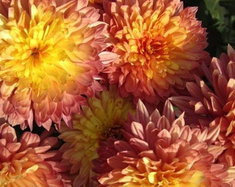 Photograph of Pink and Yellow Flowers on Canvas Print