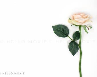 Pink Rose Stock Photo, Floral Flat Lay, Rose Styled Stock Photography, Feminine Stock Photography
