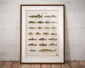 Wisconsin Native Fish Species Poster