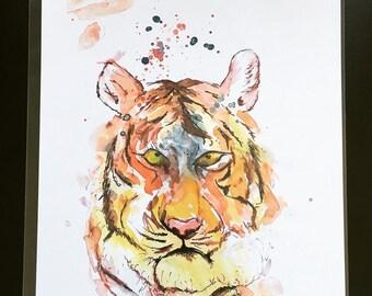 Loki the tiger