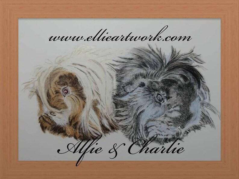 Custom Guinea Pig Portrait in Coloured Pencil Pet Portrait image 0