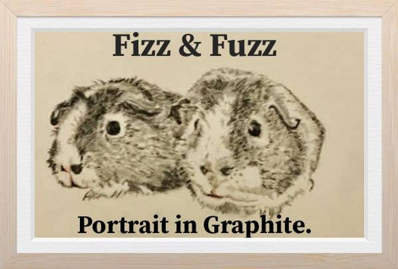 Custom Guinea Pig Portrait Pet Portrait Coloured Pencil Art image 0