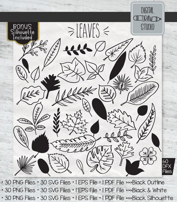 60 Hand Drawn Leaves Clip Art Tropical Foliage Outline Etsy Calendar, frames and photo frames, invitation png and psd formats | download. 60 hand drawn leaves clip art tropical foliage outline drawing illustration plant silhouette vector graphics png svg eps pdf dxf