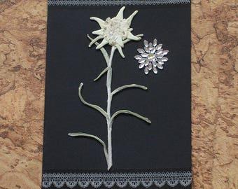 Pressed Edelweiss Greetings Card