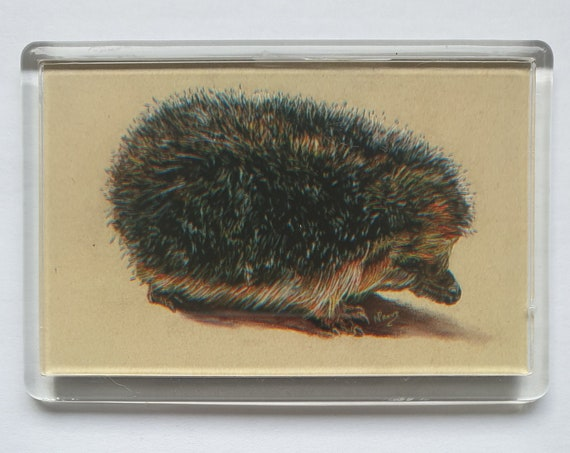 Hedgehog - Fridge magnet - 52 x 76 x 5mm
