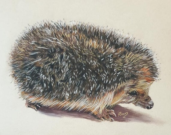 "Hedgehog - colour pastel print - 10"" x 8"""