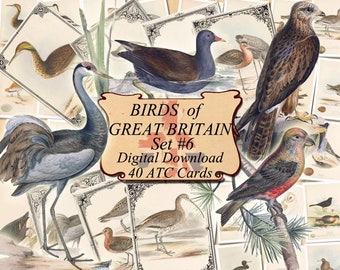 BIRDS of GREAT BRITAIN Set #4 digital collage sheet 40 atc cards Printable Instant Download Image Digital Cards Tags vintage British Isles