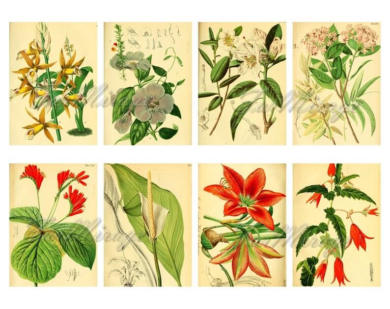GARDEN FLORA Set #2 digital collage sheet 40 atc cards Printable Instant Download Image Digital Cards Tags vintage image journals kit
