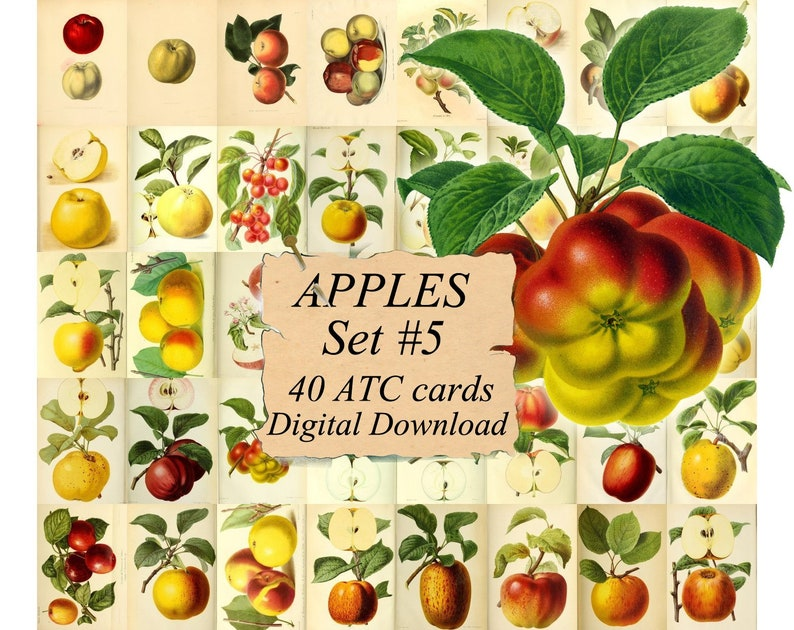 graphic about Apples to Apples Cards Printable identify APPLES Fastened #5 - electronic collage sheet 40 ATC playing cards Printable Immediate Down load Impression Electronic Playing cards Tags classic impression culmination publications publications