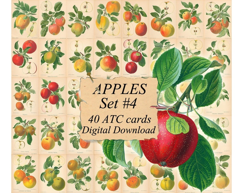 picture regarding Apples to Apples Cards Printable titled APPLES Preset #4 - electronic collage sheet 40 ATC playing cards Printable Instantaneous Down load Graphic Electronic Playing cards Tags traditional picture culmination publications guides