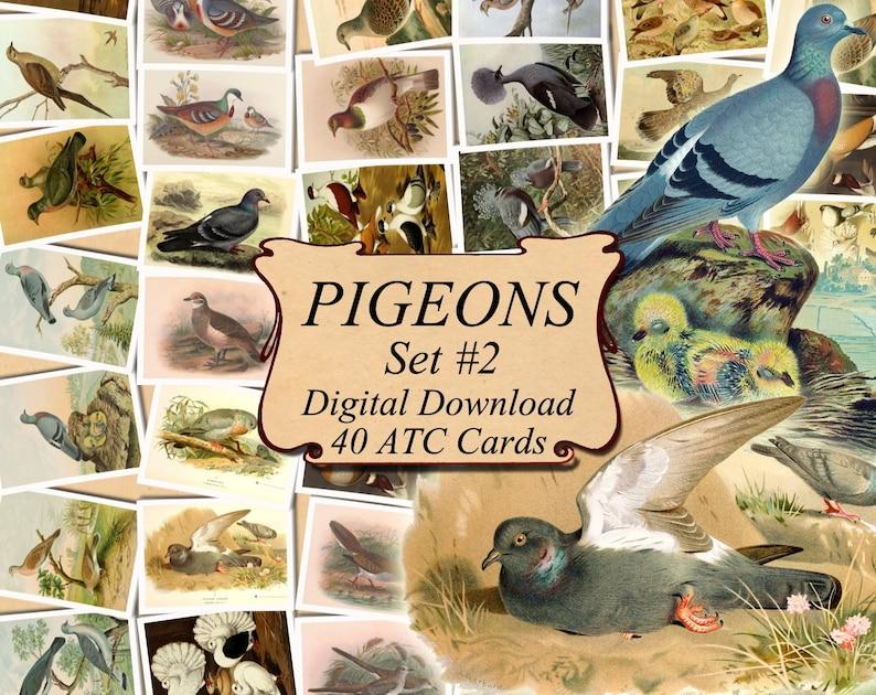 PIGEONS Set #2 digital collage sheet 40 ATC cards Printable Instant Download Image Digital Cards Tags vintage image Dove Columbus graphics