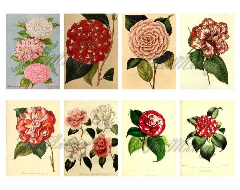 digital collage sheet 40 ATC cards Printable Instant Download Image Digital Cards Tags vintage image flowers journals CAMELLIA Set #8