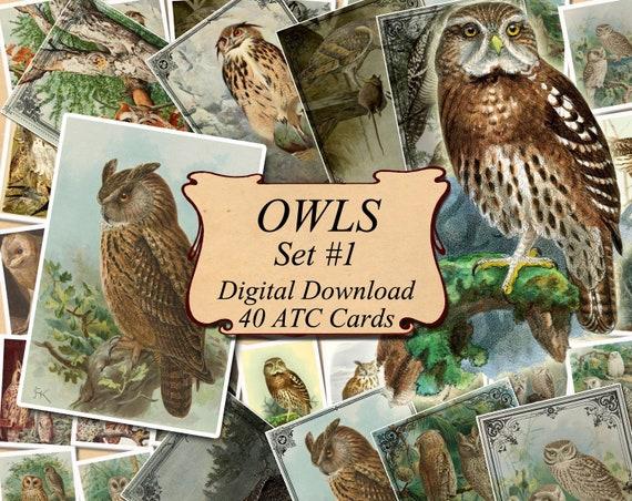 OWLS Set #3 digital collage sheet 40 ATC cards Printable Instant Download Image Digital Cards Tags vintage image bird Owl strix otus scops