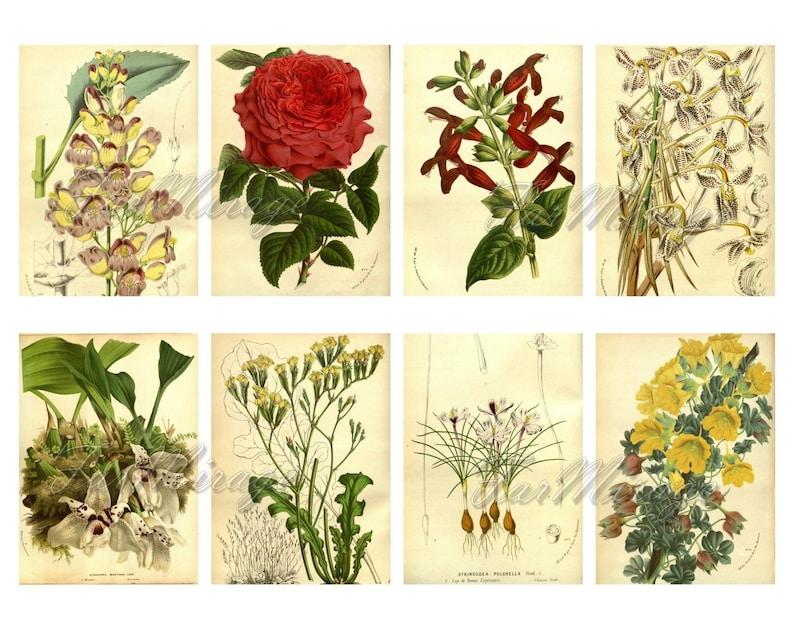 MERITORIOUS PLANTS Set #13 digital collage sheet 40 atc cards Printable Instant Download Image Digital Cards Tags vintage journals kit