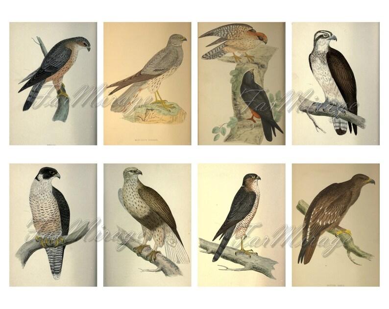 RAPTORS Set #20 digital collage sheet 40 ATC cards Printable Instant Download Image Digital Cards Tags vintage image birds or prey Eagles