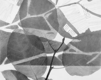 CANOPY NO. 1 Mixed Media Drawing: Digital Print