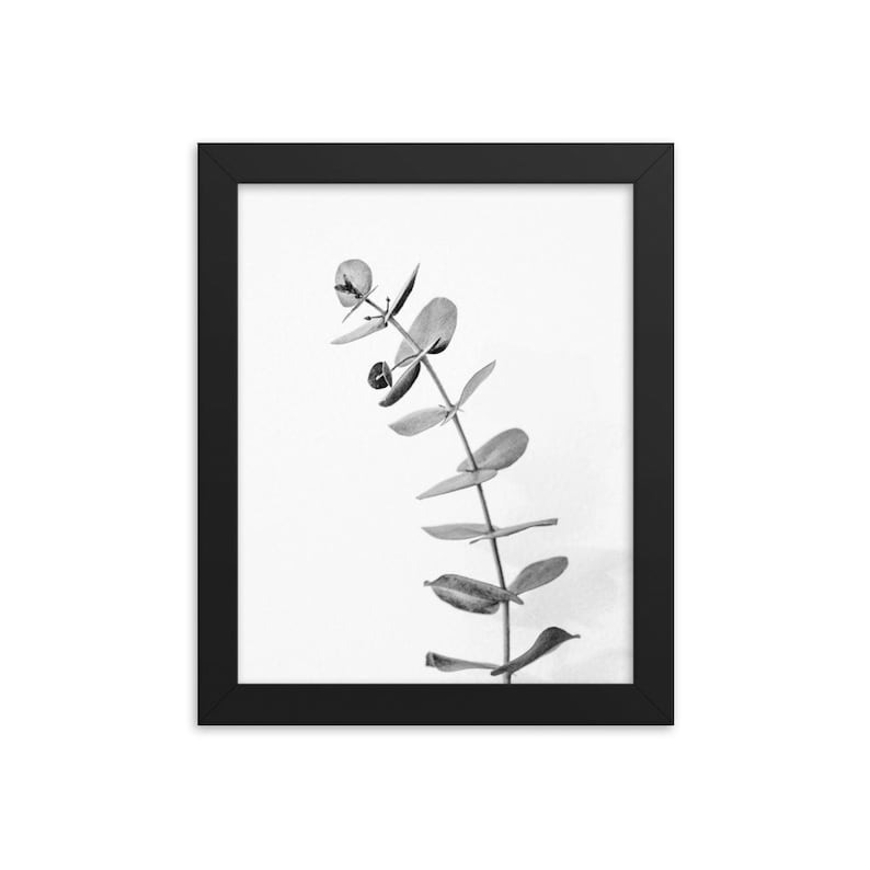 Minimalist Eucalyptus Nature Wall Decor FRAMED Leaf Black and White Photo Print Clean Modern Poster Wall Art Photography Living Room