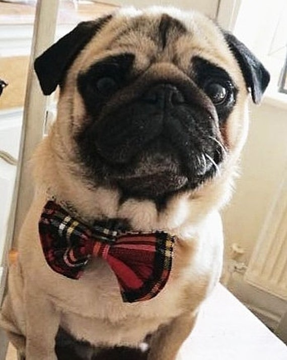 Pet Bow tie - Pet Accessories - Safe Pet Accessories - Gift for Pet - Bow tie - Pet Occasion Wear - Handmade - Free UK Shipping