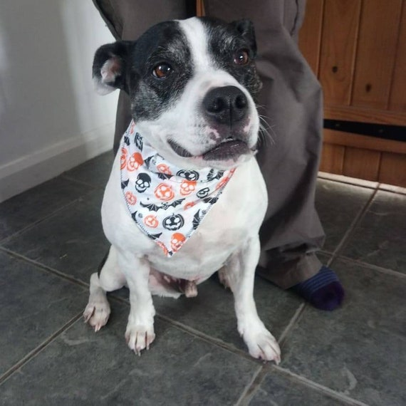 Halloween Dog Bandana - Pumpkin Dog Bandana-Dog Accessories - Gift for Dog - On Collar Bandana - Handmade - Free UK Shipping