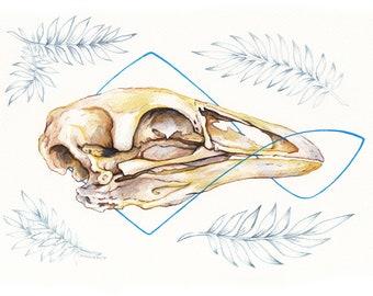 Bird skull - Original watercolour artwork