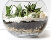 DIY Terrarium Kit (LARGE) with Glass bowl, Decor, Instructions, etc - Gift