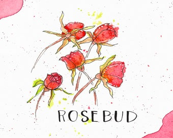 Rosebud Watercolor Print