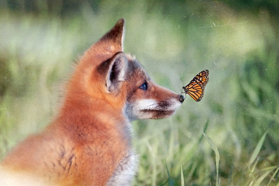 The Fox The Butterfly Photography Color Print Canvas Metal Etsy