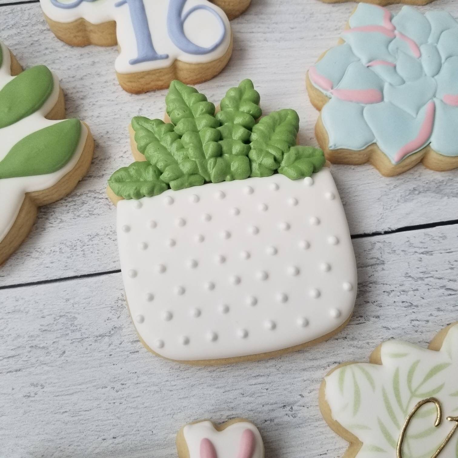 Potted Succulent Cookies Modern Minimalist Greenery Birthday Baby Bridal Shower Housewarming Thank You Gift Plant Lady Plant Mom