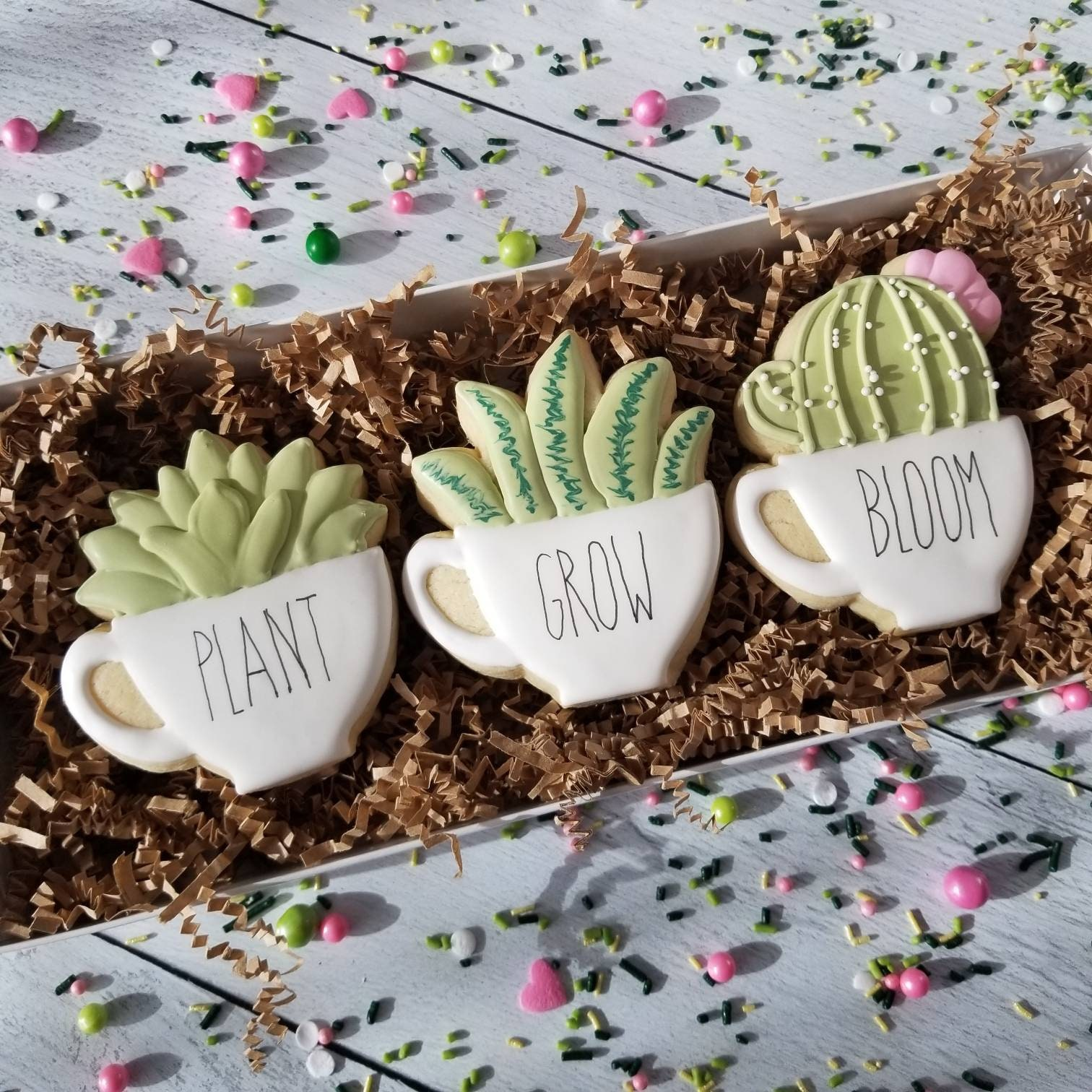 Succulent Cookie Gift Set Farmhouse Potted Cactus Coffee Tea Cup Nurse Teacher Appreciation Thank You Birthday Get Well Home Sweet