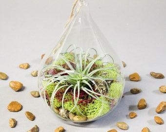 Tear Drop Succulent Terrarium