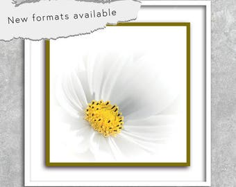 poster photography flower decor poster printable instant download 5 X 5 8 X 8 10 X 10 12 X 12 15 X 15 16 X 16 18 X 18 20 X 20 30 X 30 50 X 50