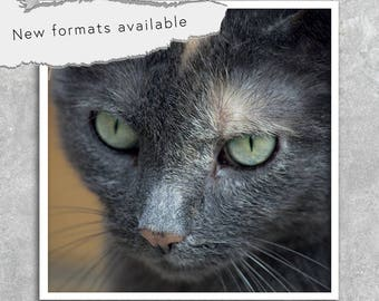 poster photography cat poster printable instant download 5 X 5 8 X 8 10 X 10 12 X 12 15 X 15 16 X 16 18 X 18 20 X 20 30 X 30 50 X 50
