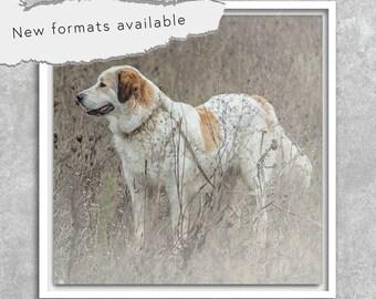 poster photography pyrenees Sheepdog poster printable instant download 5 X 5 8 X 8 10 X 10 12 X 12 15 X 15 16 X 16 18 X 18 20 X 20 30 X 30 50 X 50