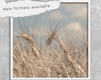 poster photography wheat fields poster printable instant download 5 X 5 8 X 8 10 X 10 12 X 12 15 X 15 16 X 16 18 X 18 20 X 20 30 X 30 50 X 50
