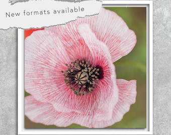 poster photography white poppy poster printable instant download 5 X 5 8 X 8 10 X 10 12 X 12 15 X 15 16 X 16 18 X 18 20 X 20 30 X 30 50 X 50