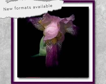 poster photography flower iris modern poster printable instant download 5 X 5 8 X 8 10 X 10 12 X 12 15 X 15 16 X 16 18 X 18 20 X 20 30 X 30 50 X 50