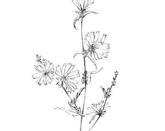 Larkspur art sketch wild flower artwork graphics downloads etsy chicory sketch blue sailors wild flower artwork line drawing botanical art prints floral poster black white printable wall decor mightylinksfo