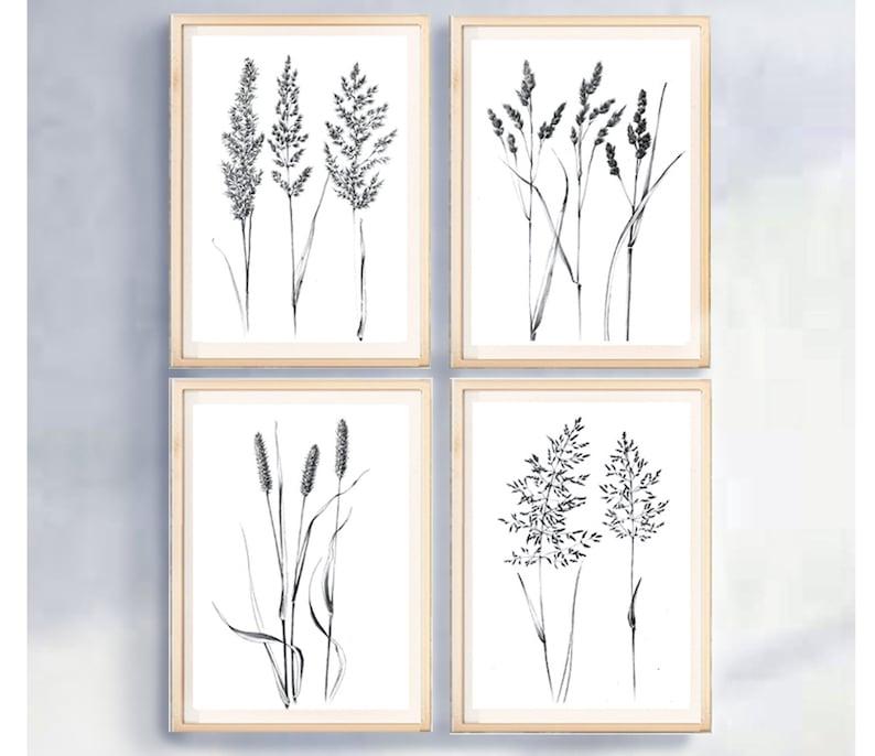 Jeu de 4, croquis d'épillets, Hygge, décor à la maison, un dessin au trait,  herbe blanche, plante de œuvres d'art, tirages d'Art botanique, ...